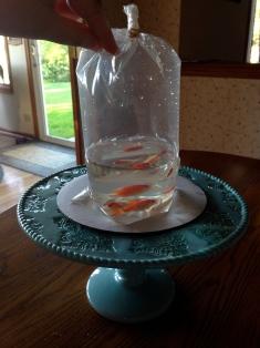 goldfish cake stand